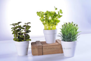 Sets of 3 Simulation Bonsai Plants Rosemary /Herbs/ Mint for Decoration pictures & photos