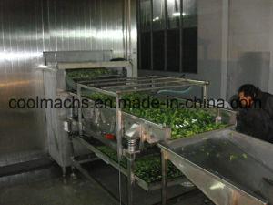 Broccoli Quick Freezing Production Line/Vegetable Processing Line pictures & photos