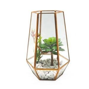 High Quality Geometric Glass Terrarium for Flower pictures & photos