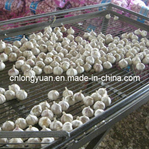 Garlic Manufacture Chinese Pure White Garlic pictures & photos