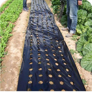 PE Mulching Film with Hole pictures & photos