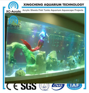 Large Aquarium Decorations/Transparent Acrylic/Transparent Acrylic pictures & photos