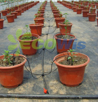 Automatic Drip Arrow Irrigation System for Potted Plants (HT1117) pictures & photos