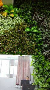 High Quality Artificial Plants and Flowers of Vertical Garden Gu-Mx2091435 pictures & photos