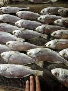 Commercial Fish Drying Machine/Fish Dryer Equipment/Fish Dryer and Smoker pictures & photos