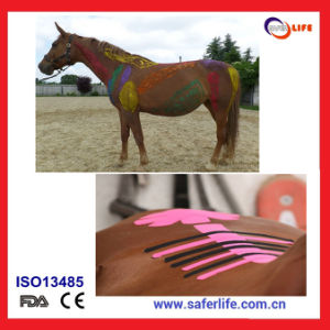 Kinesio Tape for Sports Horse Therapy Curing Taping pictures & photos