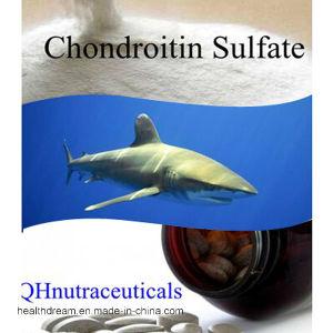 Shark Chondroitin