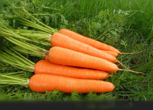 2017 Chinese New Crop Carrot with High Harvest pictures & photos