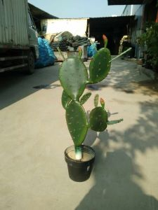 Artificial Plants of Cactus 5 Heads pictures & photos