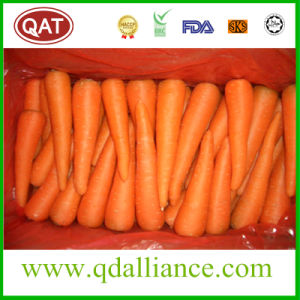 2017 New Crop Fresh Carrot pictures & photos