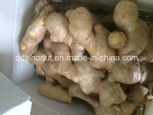 Full Dry Ginger (250g&up) pictures & photos