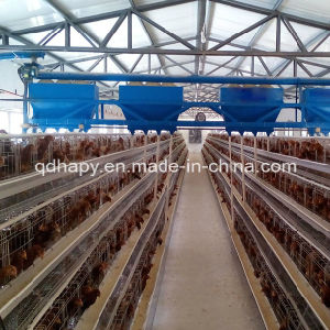 Automatic Chicken Cage for Layers pictures & photos