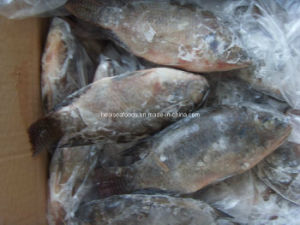 Frozen Wr Black Tilapia 300-500g pictures & photos