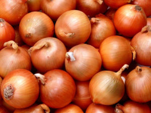 High Quality New Crop Yellow Onion