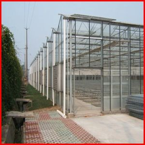 China Multi Span Commerical Venlo Glass Greenhouse for Sale pictures & photos