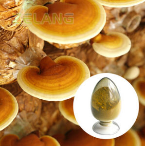 Lingzhi Mushroom Extract pictures & photos