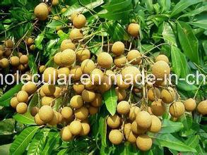 Euphoria Longan Extract/Dimocarpus Longan Extract/ Longan Extract pictures & photos