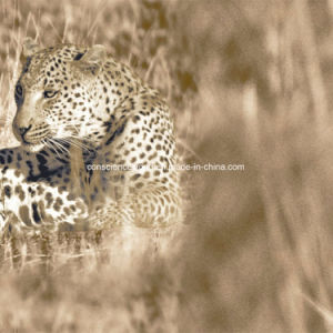 100%Polyester Leopard Design Pigment&Disperse Printed Fabric for Bedding Set pictures & photos