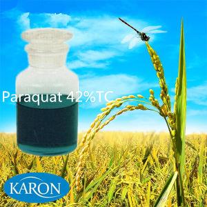 Agriculture Pesticides Paraquat (42%TC, 20%SL)