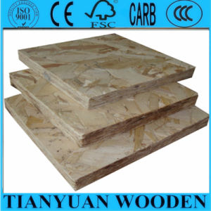 China OSB for Building / Packing / Furniture pictures & photos