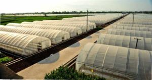 Hot Sale Multi Span Greenhouse with Quality Galvanized Steel Skeleton pictures & photos