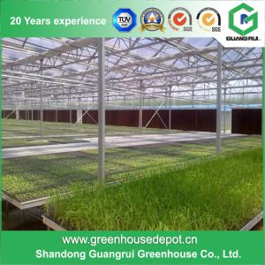 Glass Greenhouse Polyurethane Agricultural Plastic Houses Hydroponics pictures & photos