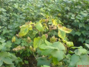 Bio-fungicide pictures & photos