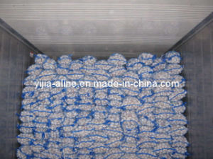 Normal White Garlic (1)