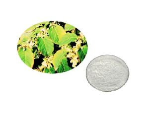Natural Gentrin Knotweed Extract Powder Plant Extract pictures & photos