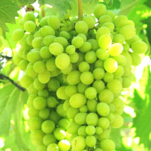 Compound Amino Acid Organic Fertilizer pictures & photos