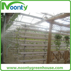 a Stand Tube Growing for Strawberry Hydroponics pictures & photos