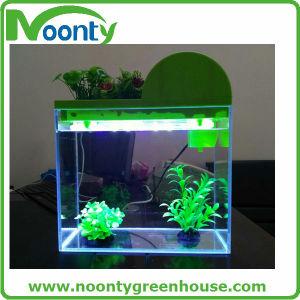Mini Aquaponics Tank for Home and Office, Fishbowl, Fish Globe; Fish Jar, Fish Tank pictures & photos