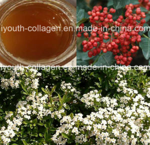 Honey Top Pricklyash Peel Honey/Queen of Honey, Rare, Precious Anticancer, Antiaging, Nourish Blood, Antioxidation, Therapy Asthma and Anemia, Prolong Life pictures & photos
