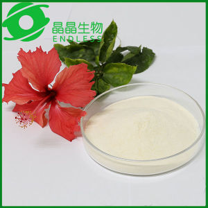 Magnolia Officinalis Rehd. Et Wils Extract Magnolol Extract  Powder 80% pictures & photos