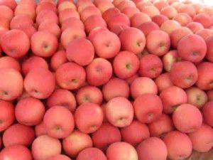 FUJI Apple in China with Competitive Price pictures & photos