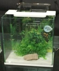 Q25 Ultra Clear Aquarium Glass Fish Tank