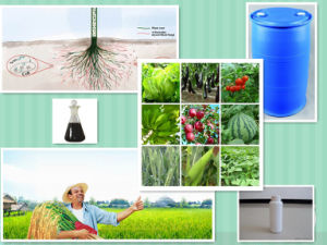 Amino Acid Liquid Organic Compound Foliar Liquid Fertilizer NPK pictures & photos