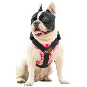 Pet Dog Hot Salen Lead Harness (H011) pictures & photos