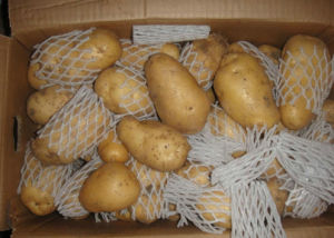 China Fresh Potato Holland Veriety Exported Quality pictures & photos