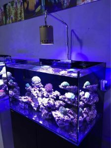 Special Heat-Sinking Solution High Quality LED Aquarium Light pictures & photos