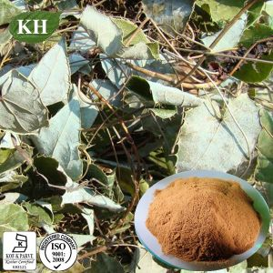 Epimedium Grandiflorum Extract Treating Cancer pictures & photos