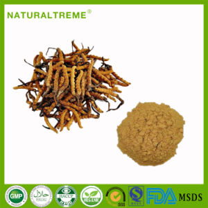 Traditional Chinese Medicine Summer Grass-Winter Worm