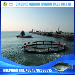 HDPE Fish Cage Farming in Victoria Lake pictures & photos