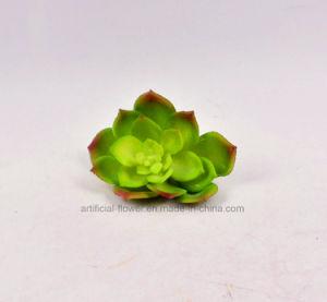Artificial Plastic Succulent Plants Pick pictures & photos