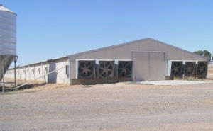 Steel Structure Poultry House (SSPH-141) pictures & photos