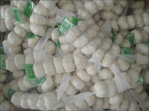 White Garlic (1)