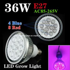 2014 New Design 36W PAR38 LED Grow Light (ZW0005)