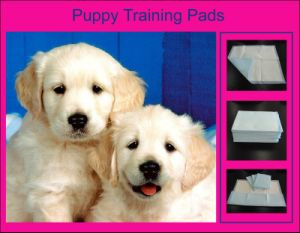 Extra Absorbency Pet Pads pictures & photos
