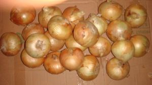 High Quality and Low Price Yellow Onion (3-5cm) pictures & photos
