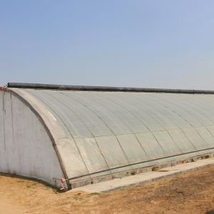 Hot Sale Low Cost Sunlight Film Greenhouse for Agriculture pictures & photos